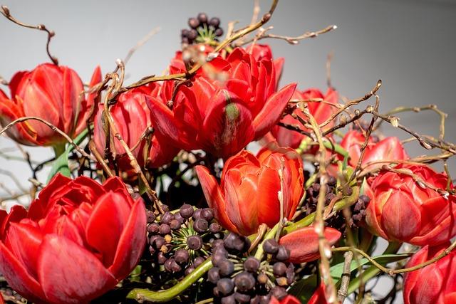 Flower, Tulips, Nature, Tulip Bouquet, Red, Orange