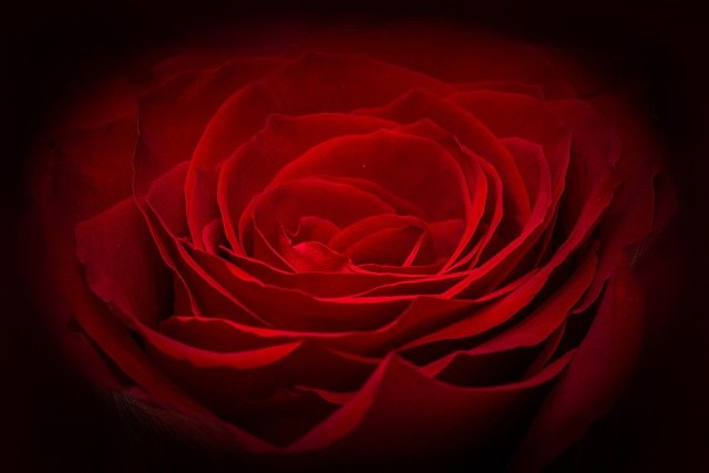 Rose, Red Rose, Red, Flower, Petals, Waves, Glow