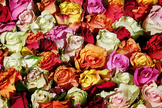 Roses, Flowers, Rose Flower, Bloom, Blossom, Bloom, Red