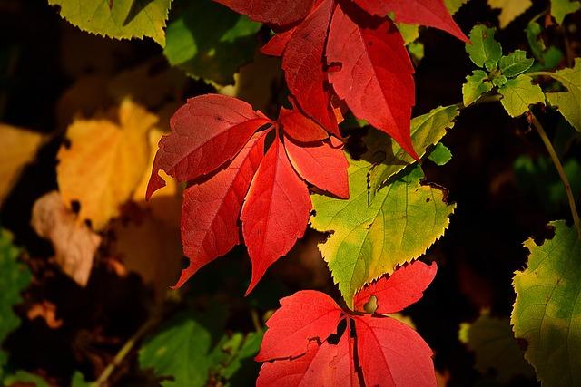 Autumn Leaf, Color, Foliage, Seasonal, Bright, Red