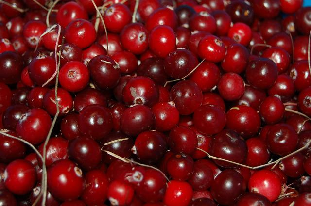 Cranberries, Berry, Red, Vitamin, Autumn, Swamp, Fruit