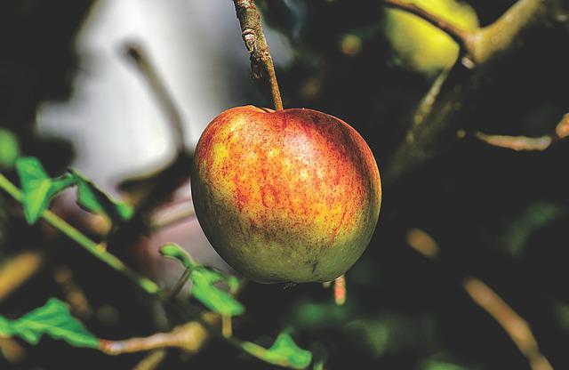 Apple, Fruits, Fruit, Apple Tree, Ripe, Red, Delicious