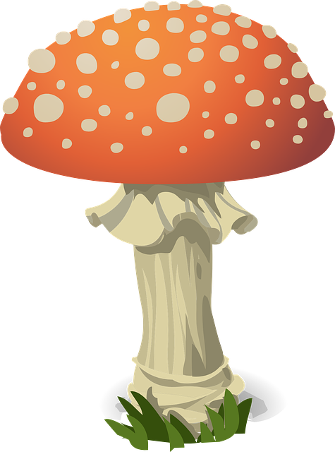 Mushroom, Fly Agaric, Red, Toxic, Nature, Fungus