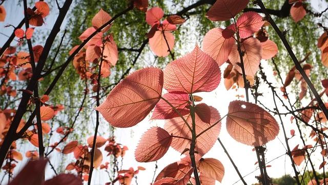 Leaf, Red Leaves
