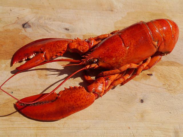 Lobster, Cook, Food, Seafood, Healthy, Shellfish, Red