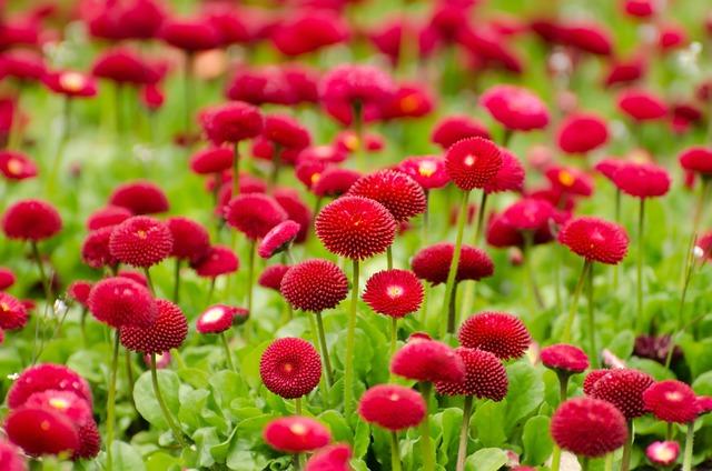 Flower, Red, Summer, Spring, Gardening, Macro, Object