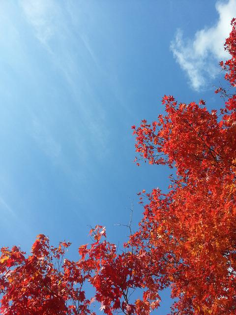 Autumn, Autumn Leaves, Sky, Autumn Sky, Red Maple Leaf