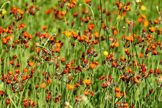 Flower Meadow, Meadow, Grass, Flowers, Orange, Red