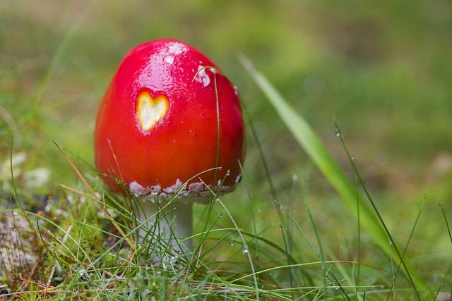 Fly-agaric, Mushroom, Landscape, Meadow, Red Mushroom