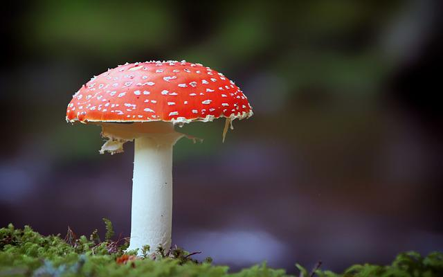 Fly Agaric, Mushroom, Nature, Red, Forest