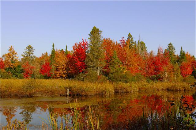 Colors, Fall, Orange, Red, Nature, Trees, Leaves