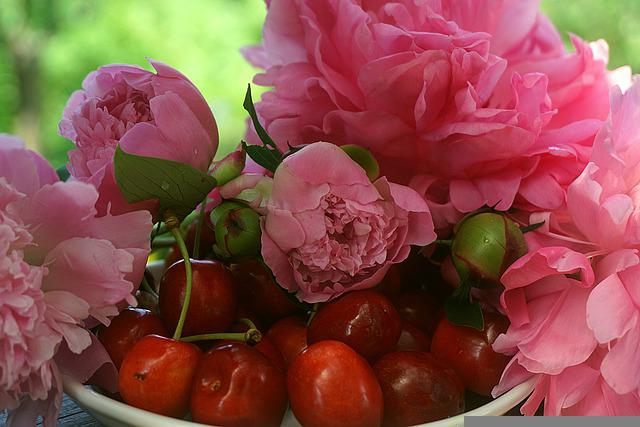 Cherry Ripe, Red, Peonies Pink, Decoration