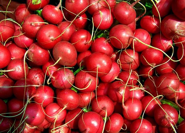 Radish, Red Radish, Vegetables