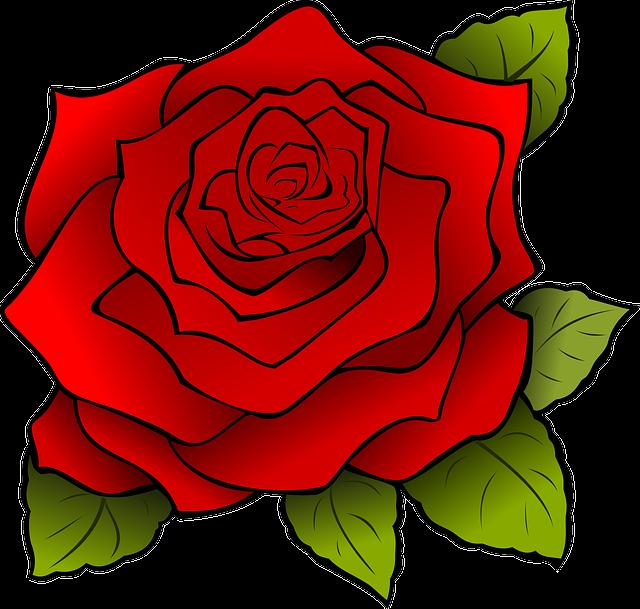 Flower, Red, Rose, Blossom, Nature, Romantic