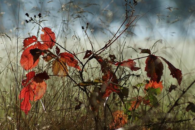 Autumn, Tree, Smaller Tree, Nature, Beech, Sucker, Red