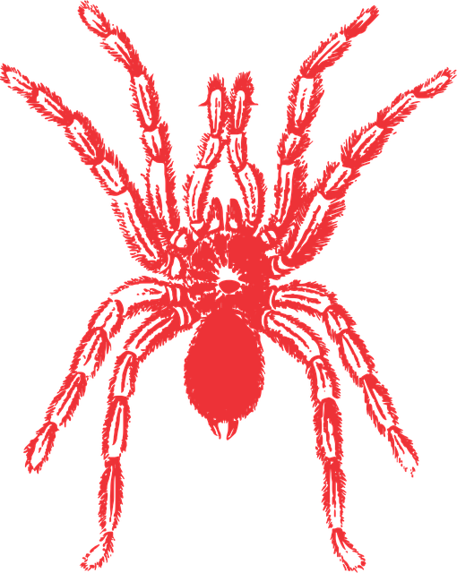 Spider, Vector, Red, Animal, Nature, Free Vector Images