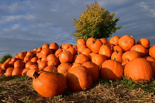 Pumpkin, Giant Pumpkin, Squash, Red, Pumpkins