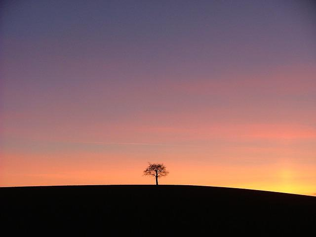 Tree, Sunset, Alone, Lonely, Silhouette, Red, Stonnal