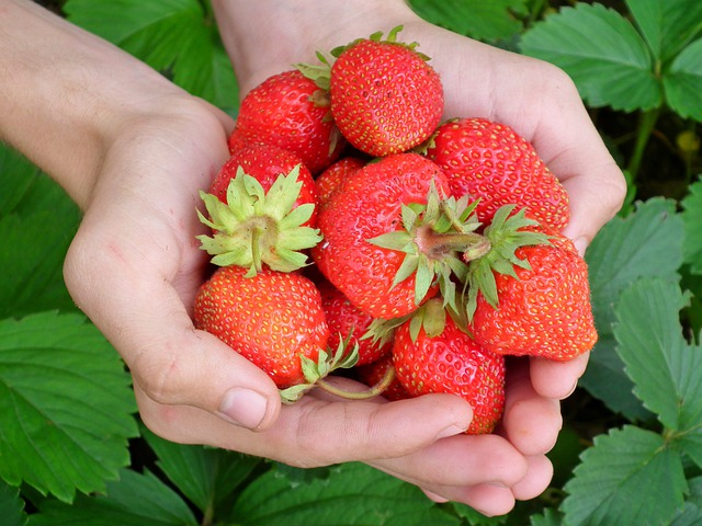 Berry, Strawberry, Hands, Leaves, Red, Wild Strawberry