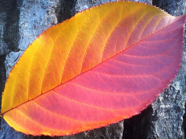 Foliage, Autumn, Red, Yellow, Seasons