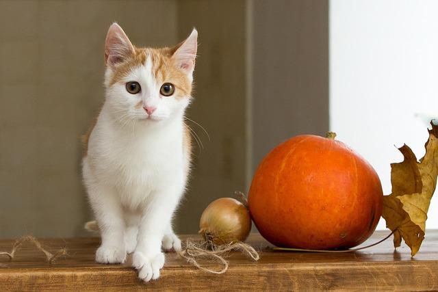 Cat, Redhead, Pet, Red-headed Cat, Housecat, Kitten