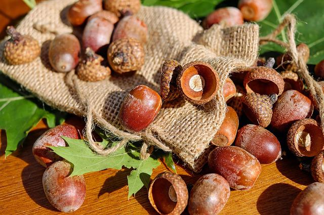Acorns, Tree Fruit, Fruits, Shiny, Red-oak