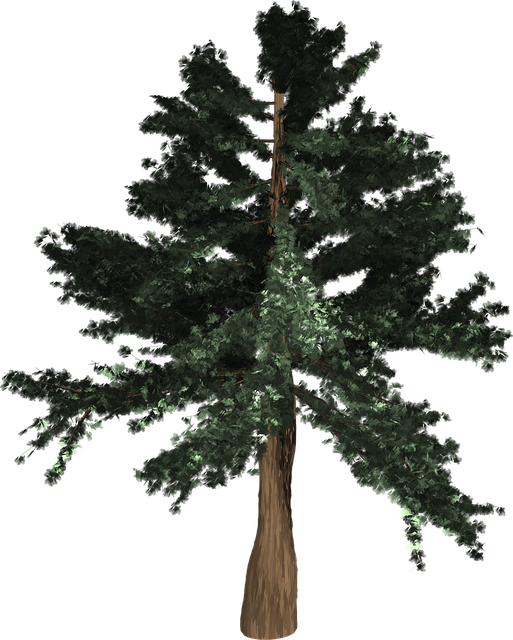 Tree, Evergreen, Isolated, Pine, Spruce, Redwood