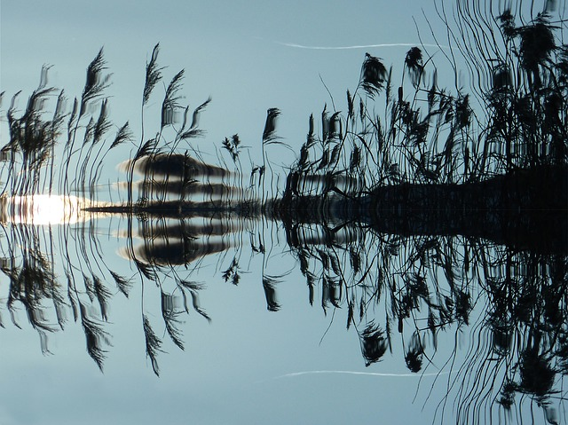 Reed, Water, Mirroring, Lake, Bank, Nature, Landscape
