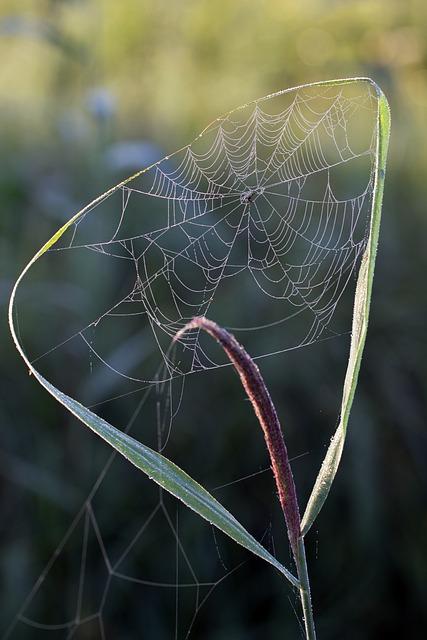 Cobweb, Morning Sun, Reed, Nature, Nature Conservation
