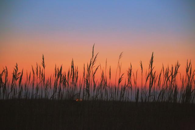 Reed, Reeds, Glow, The Reed Fields Exposure To