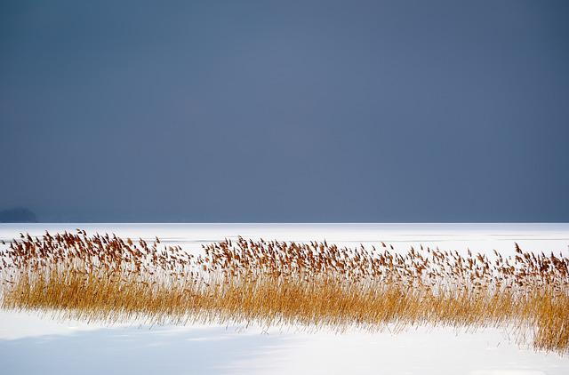 Winter, Lake, Frozen, Ice, Reed, Cold, Snow, Wintry