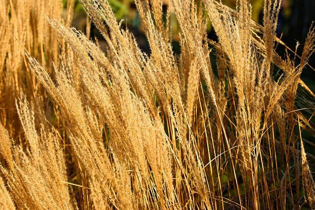 Winter, Reed, Sun, Sunny, Nature, Landscape, Bank, Wind