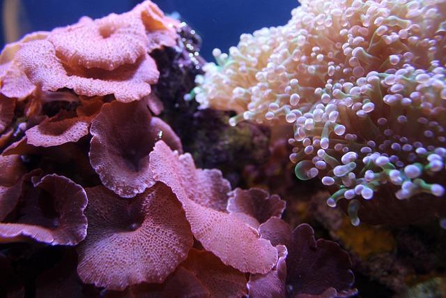 Coral, Reef, Aquarium, Marine, Undersea
