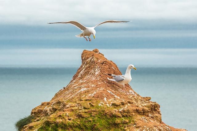 Gulls, Ocean, Reefs, Devon, England