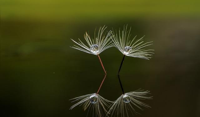 Macro, Nature, Reflection, Beautiful, Reflections