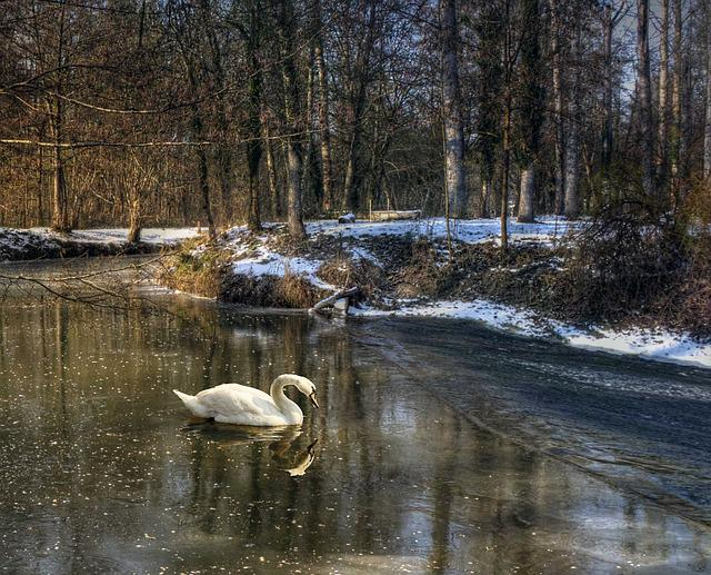 Body Of Water, Nature, Reflection, River, Outdoor, Swan
