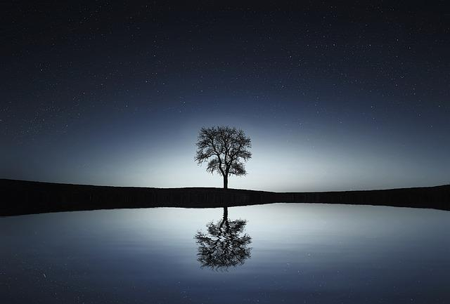 Tree, Lake, Reflection, Water, Calm, Tranquil Scene