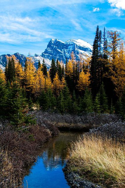 Rocky Mountain, Larch Valley, Reflection In Water