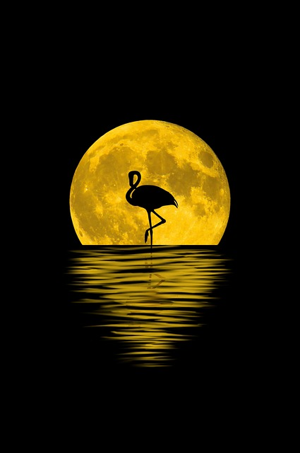 Moon, Reflection, Flamenco, Animal, Full Moon