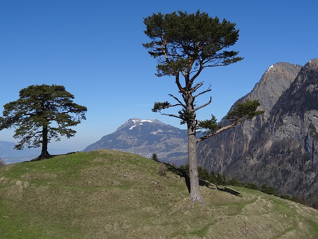 Mountains, Pine, Regitzer Spitz, Falknis, Switzerland
