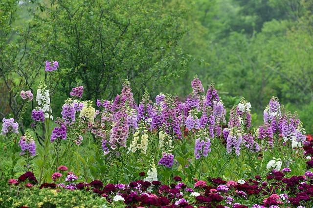 Rehmannia Glutinosa, Flower, Spring, Grassland, Park