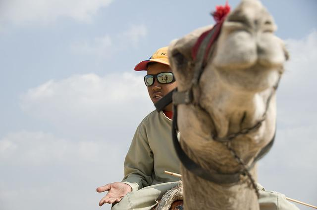 Camel, Egypt, Africa, Reiter, Camel Riders, Animals