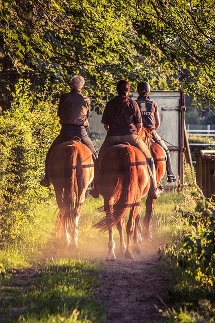 Reiter, Ride, Horses, Equestrian, Relaxation