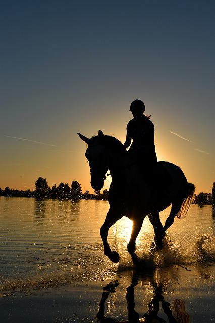 Horse, Sea, Gallop, Sunset, Water, Wet, Ride, Reiter