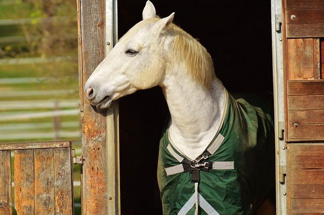 Horse, Animal, Ride, Reiterhof, White, Coupling, Meadow
