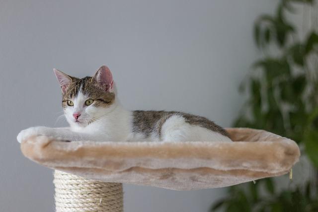 Boss, Concerns, Relax, Animal, Cat, Cat Tree