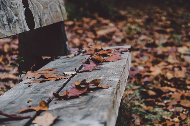 Bench, Fall, Autumn, Leaf, Leaves, October, Rest, Relax