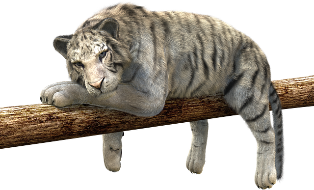Tiger, Branch, Concerns, Relax, Lurking, Predator