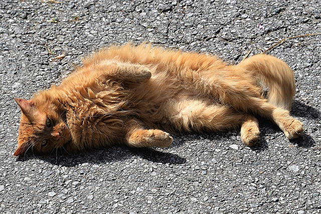 Cat, Sun, Concerns, Relax, Chill Out