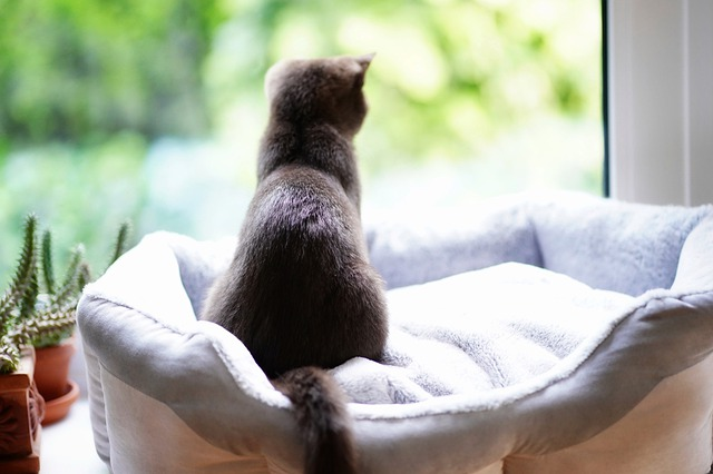 Cat, Window, Window Sill, Relaxed, Curious, Pet